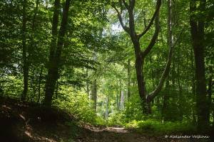 npl-overland-Offroad-Tour-Serbien-Steinboegen-2018 (14)