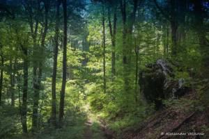 npl-overland-Offroad-Tour-Serbien-Steinboegen-2018 (28)