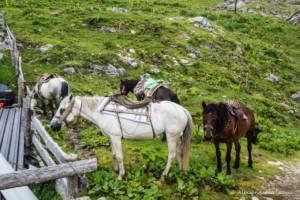 npl-overland-offroad-tour-abenteuer-montenegro-2018 (138)
