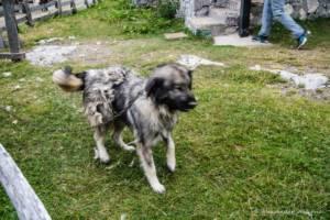 npl-overland-offroad-tour-abenteuer-montenegro-2018 (139)