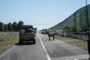 npl-overland-offroad-tour-abenteuer-montenegro-2018 (184)