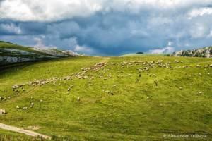 npl-overland-offroad-tour-abenteuer-montenegro-2018 (20)