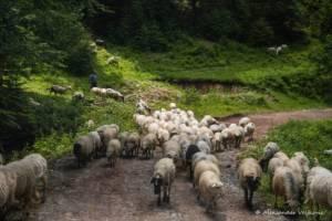 npl-overland-offroad-tour-abenteuer-montenegro-2018 (232)