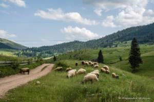 npl-overland-offroad-tour-abenteuer-montenegro-2018 (241)