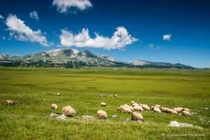 npl-overland-offroad-tour-abenteuer-montenegro-2018 (265)